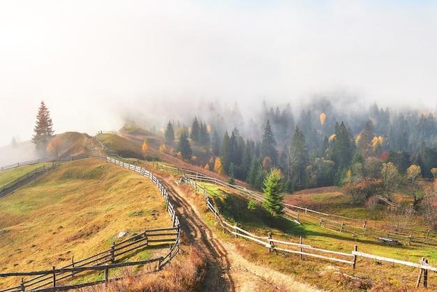 朝の霧は、金箔で覆われた秋の山の森の上にスクラップで忍び寄ります。 Premium写真