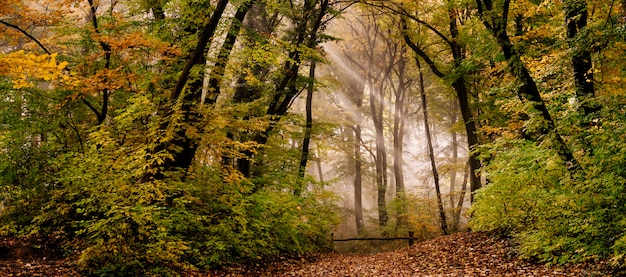 Morning fog in the forest Premium Photo