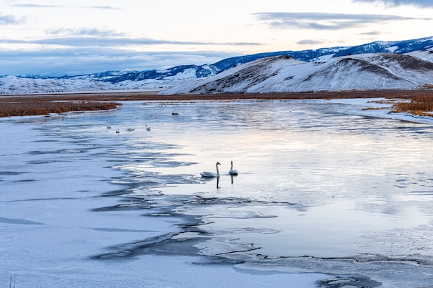 ワイオミング州エルク避難公園の冬の風景の中の朝の湖 Premium写真