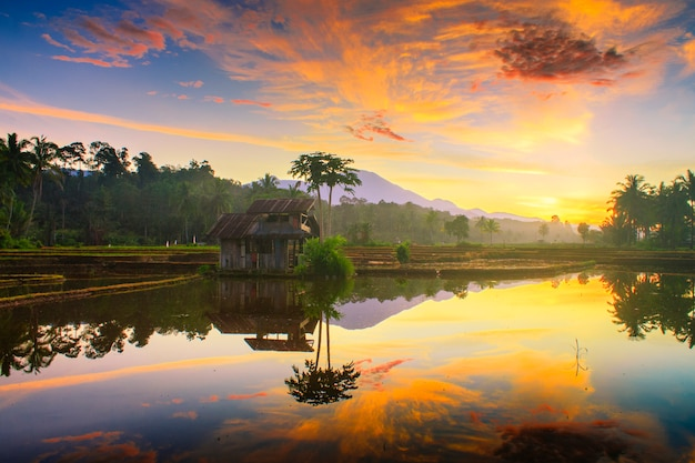 Morning sky at rice fields in north bengkulu indonesia Premium Photo