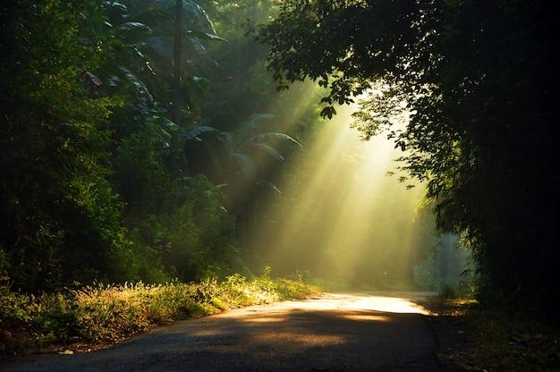 Лучи утреннего солнца проникают сквозь деревья Premium Фотографии