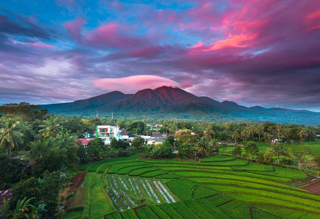 Morning sunrise at paddy fields in north bengkulu asia indonesia, beauty color and sky natural light Premium Photo