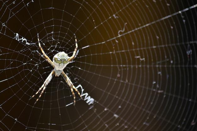 Mortal spider web nature pretty | Free Photo