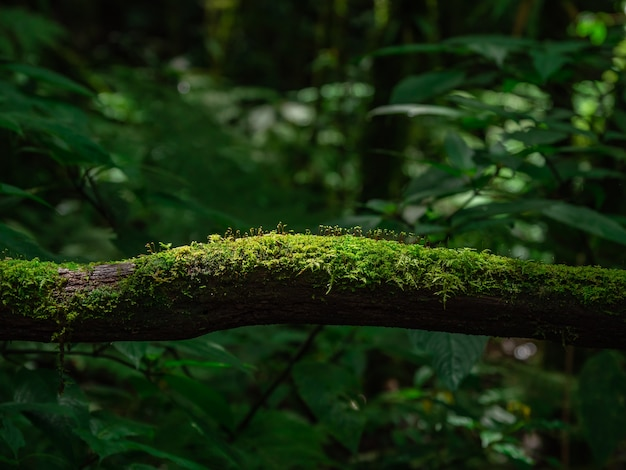Moss and fern in rain forest Premium Photo