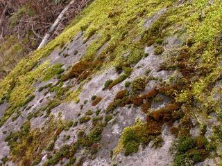 moss on rocks plant photo free download. Black Bedroom Furniture Sets. Home Design Ideas