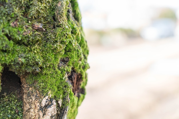 Moss on tree trunk Free Photo