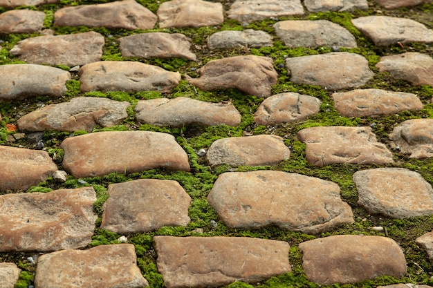 Mossy ground in the middle of a cobblestone pathway Free Photo