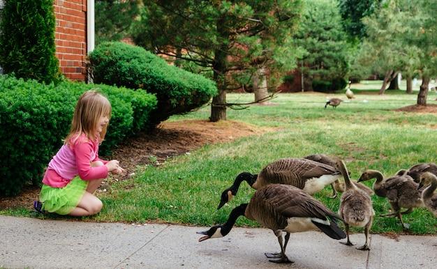 Mother goose leads gosslings across field toward Premium Photo