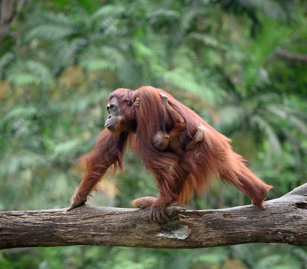 hutan terbesar di indonesia