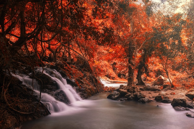 Motion waterfall at rainforest in autumn Premium Photo