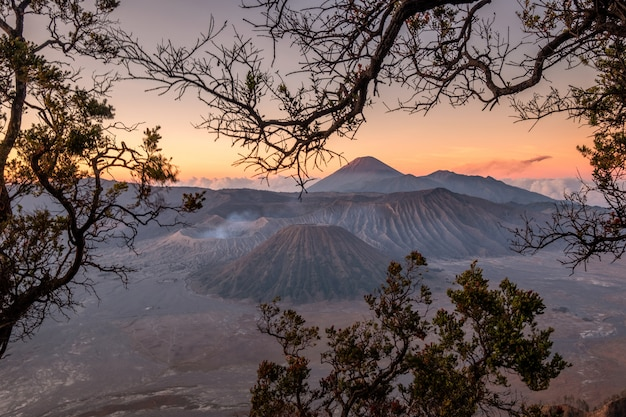 Mount volcano an active with tree frame at sunrise Premium Photo