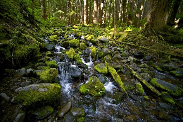 Mountain creek Free Photo
