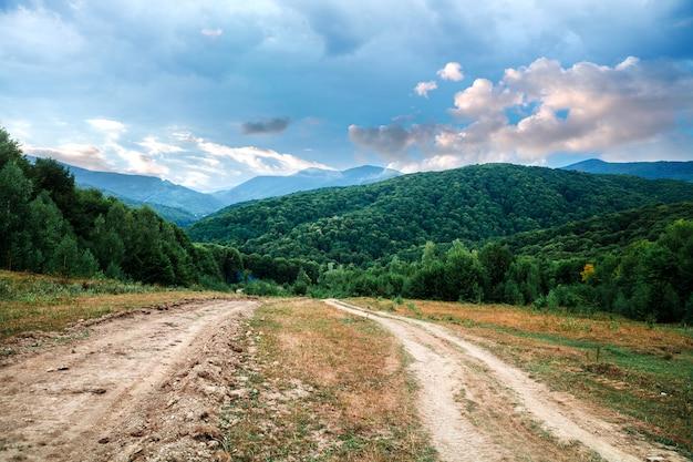 Mountain landscape, pine tree forest Premium Photo