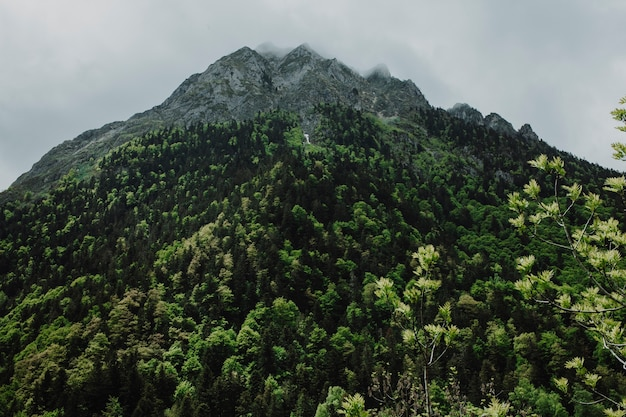Mountain landscape with green trees Free Photo