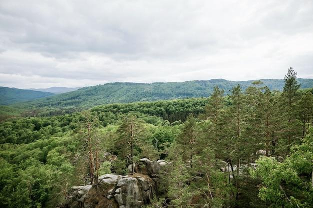 山松と落葉樹林の風景 Premium写真