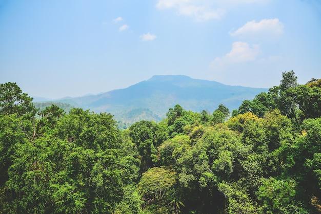晴れた日の山脈と常緑樹 Premium写真