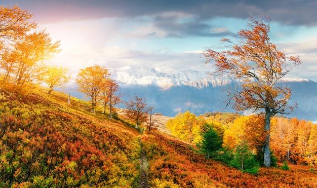 Mountain range in the carpathian mountains in the autumn season. Premium Photo