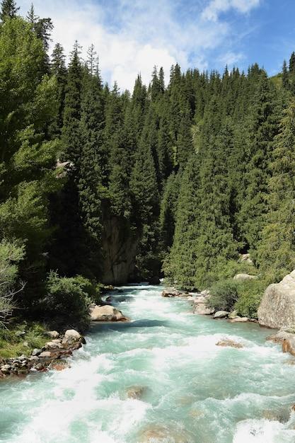 Mountain river. Premium Photo