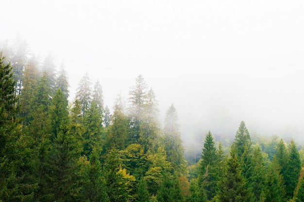 Mountain slopes, forest, hills, morning fog Premium Photo