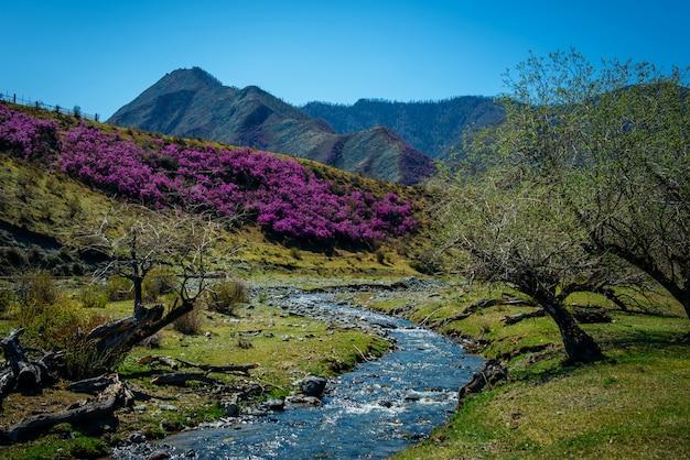 開花の丘と山の間の渓流 Premium写真