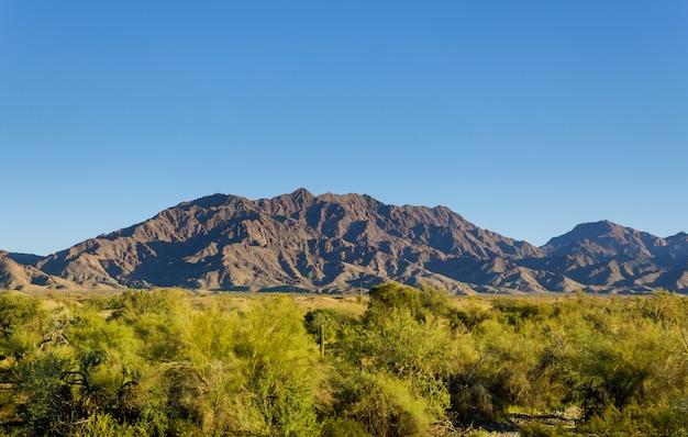 Mountain and vegetation Premium Photo