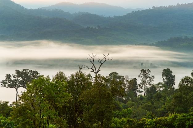 Mountain views and beautiful mist of phu langka national park, thailand Premium Photo