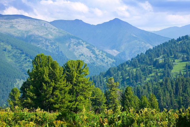 Mountains landscape with cedar  forest Free Photo