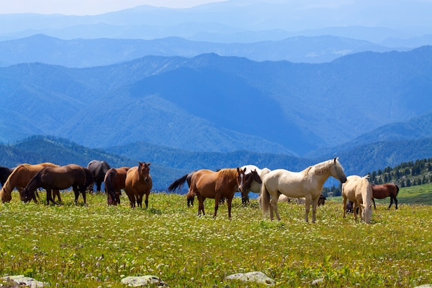 Mountains landscape with  horses Free Photo