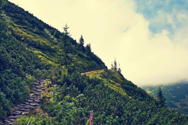 Montagna con alberi verdi. Foto Gratuite