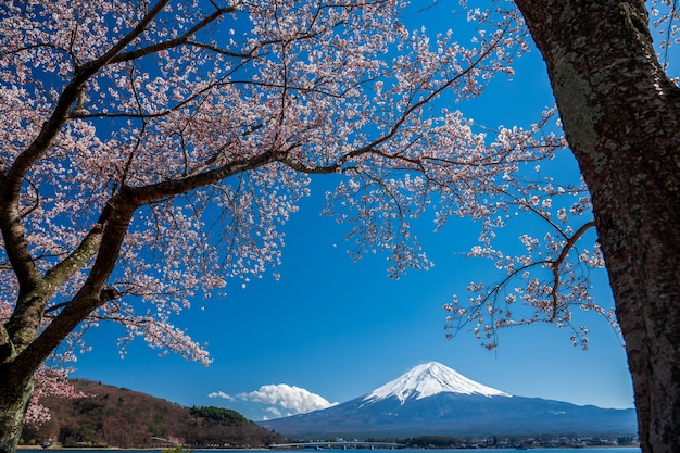 Mt. fuji in the spring time with cherry blossoms at kawaguchiko fujiyoshida, japan. Premium Photo