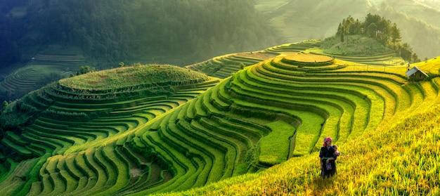 Mu cang chai, vietnam landscape terraced rice field near sapa. mu cang chai rice fields stretching across mountainside in vietnam. Premium Photo