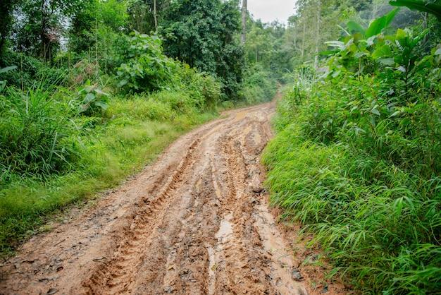 Mud road in forest Premium Photo