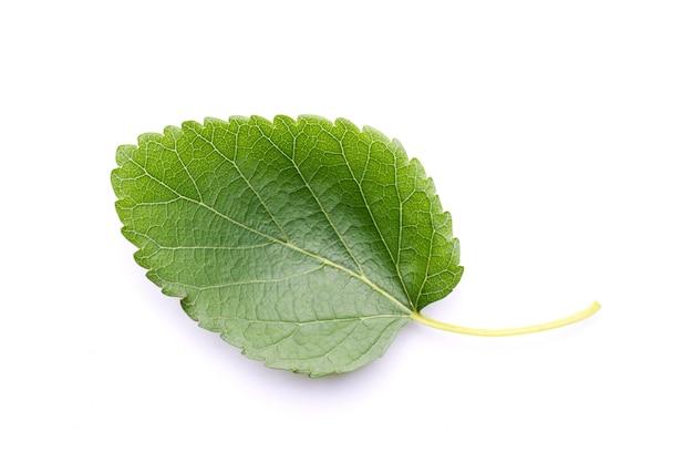 白い壁に桑の葉 Premium写真