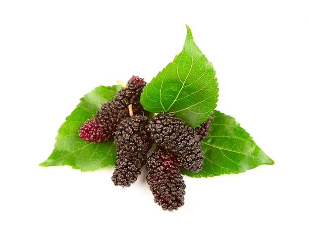 Mulberry with leaves isolated on a white background Free Photo
