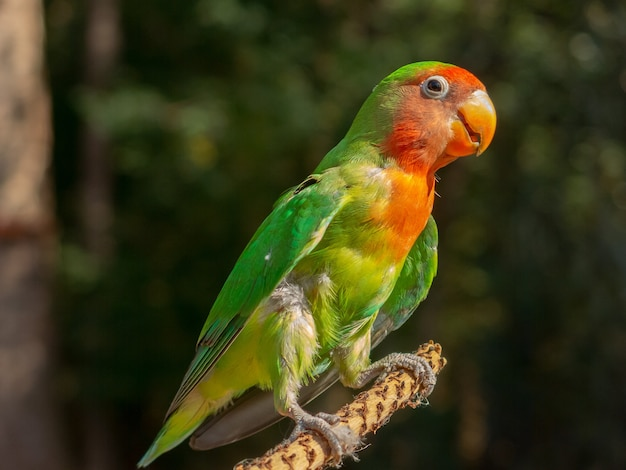 木の枝に色とりどりのインコ Premium写真