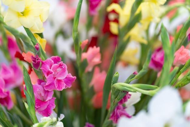 Разноцветные цветы гладиолуса в вазе Premium Фотографии