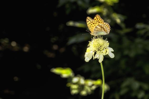 Farfalla multicolore che si siede in cima a un fiore giallo Foto Gratuite
