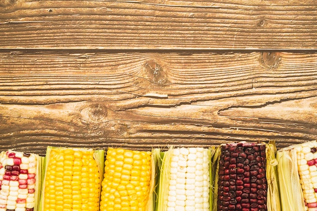 Multicolored corn on cob on wooden desk Free Photo