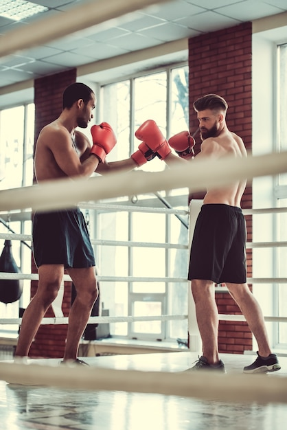 Muscular boxers with bare torsos are practicing fight. Premium Photo