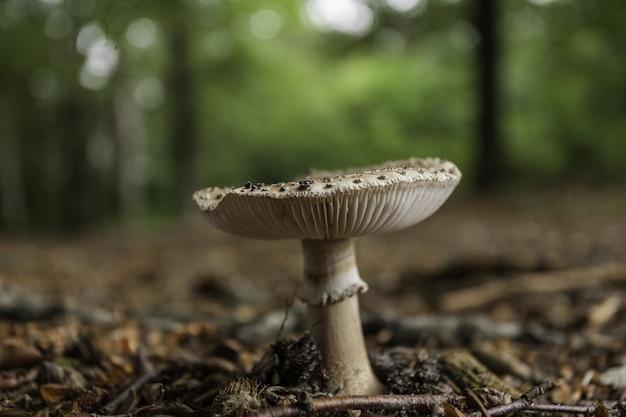 Spore di funghi nella foresta Foto Gratuite