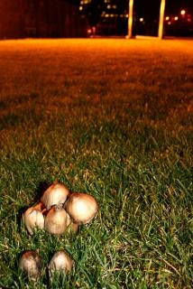 mushrooms  surreal Free Photo