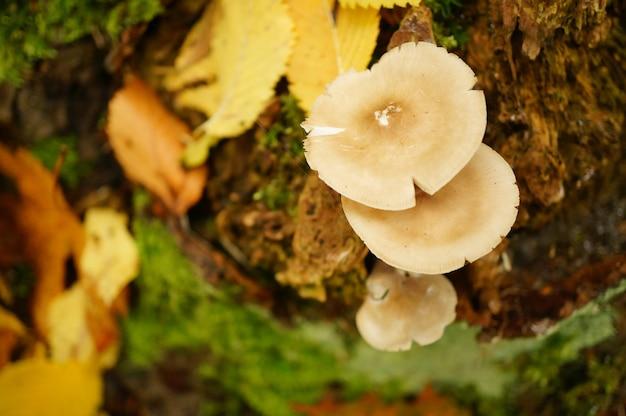 Funghi che crescono sul terreno circondati da foglie gialle secche Foto Gratuite