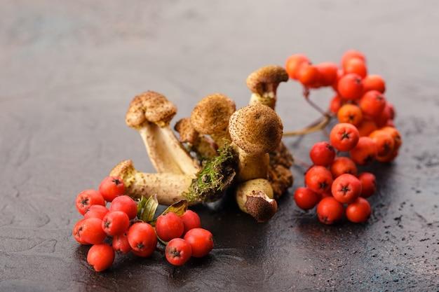 Mushrooms honey agarics Premium Photo