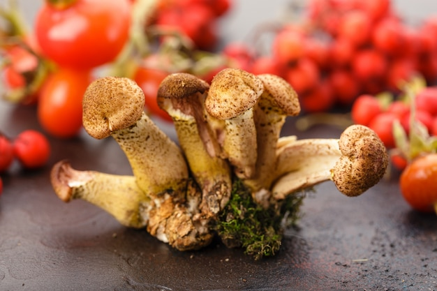 Mushrooms honey agarics Premium Photo