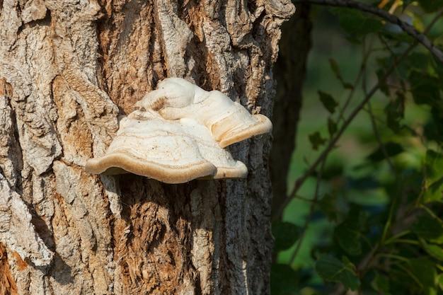 Mushrooms on the tree Premium Photo