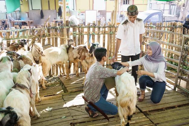 Мусульманская пара на животноводческой ферме покупает козу для церемонии жертвоприношения в ид адха Premium Фотографии