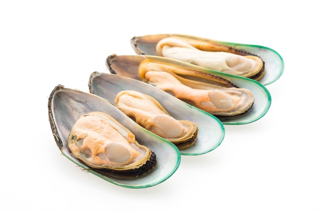 Mussel isolated Free Photo