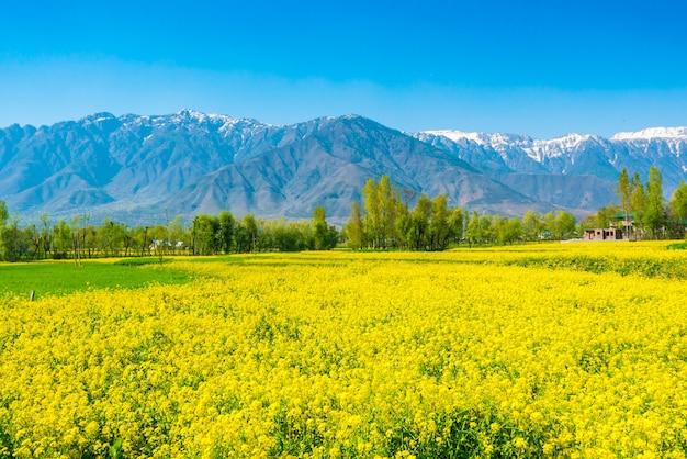 カシミール州、インド 無料写真