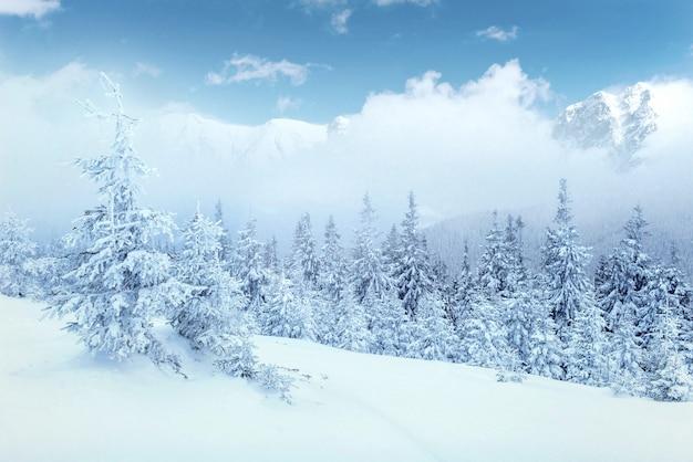 冬の神秘的な冬の風景の雄大な山々。 無料写真