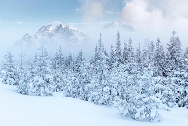 겨울에 신비한 겨울 풍경 장엄한 산입니다. 무료 사진